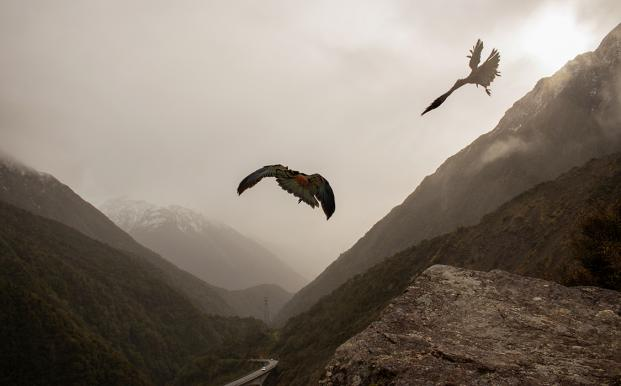 kea in flight Animal Lover Makes Most of Study Experience 1125x700