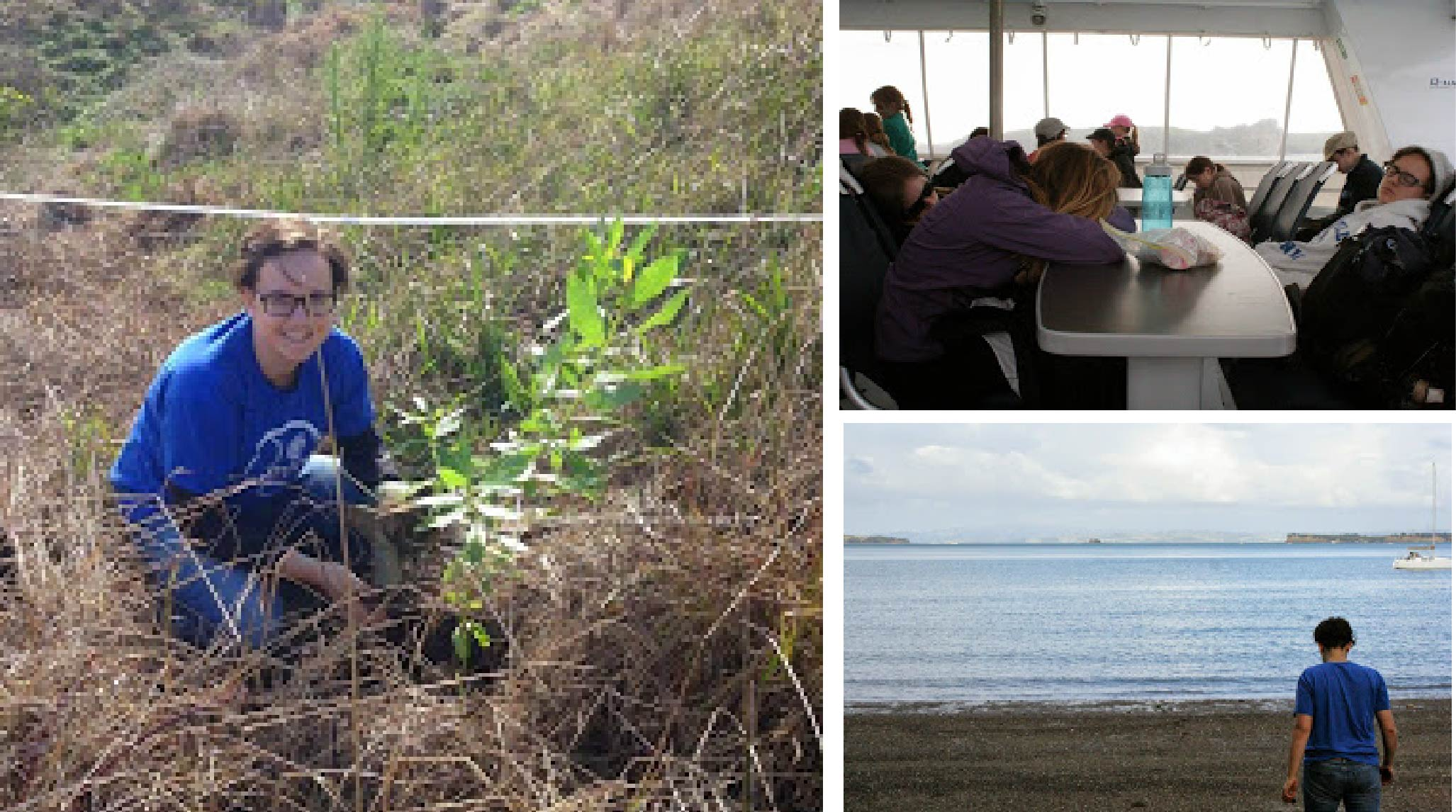 Planting trees on Motutapu Island collage