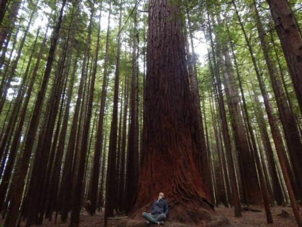 blog tips redwoods