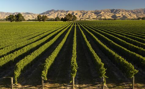 Marlborough Vineyard 2