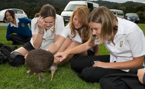 Whangarei Girls High School Meeting a Kiwi